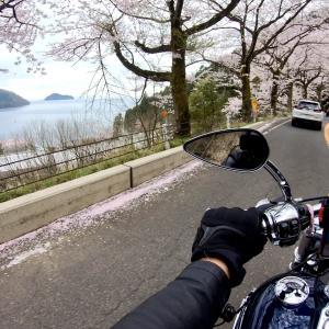 ②奥琵琶湖お花見ツーリングその2 春の奥琵琶湖パークウェイ