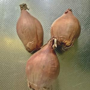 エシャロットから油蔥酥を作ってみました