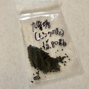 台湾バジル(九層塔)の栽培日記リターンズ