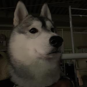じゃじゃ丸はいい犬