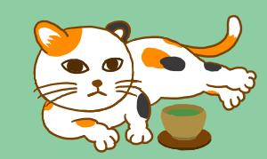 猫探し 保護猫里親編