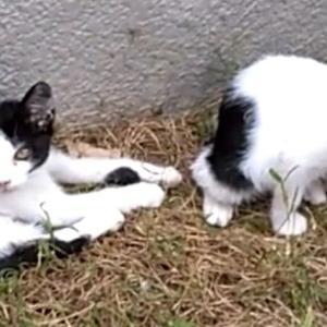 猫探し 野良猫編その2