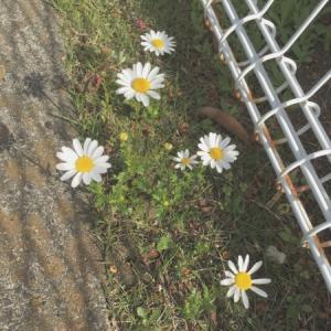 道ばたに咲いた花