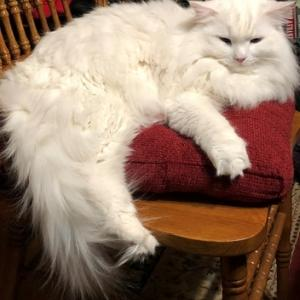 冬の靴状況:猫に教わった短気は損気