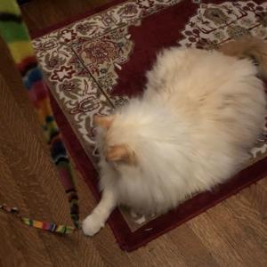 荒ぶり猫:バレンタインデー朝