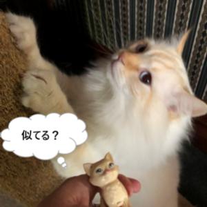 猫と遊んでる暇な一日:なおみちゃんおめでとう!