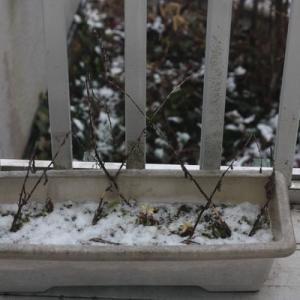 雪の猫ら記念日、5周年