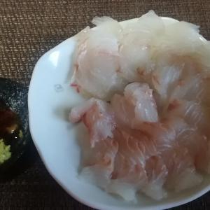 #140 Only sashimi for dinner tonight 食欲無しヒラメ刺身だけ