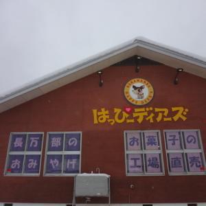 #190 夕張メロン格安情報YUBARI brand melons at a discount