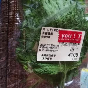 #245 大きい大葉Edible plants shiso