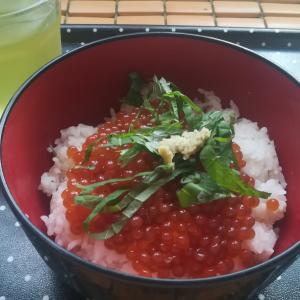 #265 昨日昼食は今夏初釣果鮭でイクラ丼 Salmon Roe Rice Bowl
