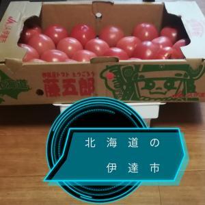 "#280 ""Togoro Tomato"" in Date city 藤五郎トマト北海道伊達市農協"