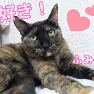 【メシウマ】ニトリのひざ掛けが好きすぎて寝落ちしてしまうサビ猫