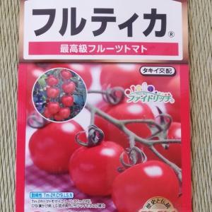 中玉トマト(フルティカ)に種まきから初収穫まで