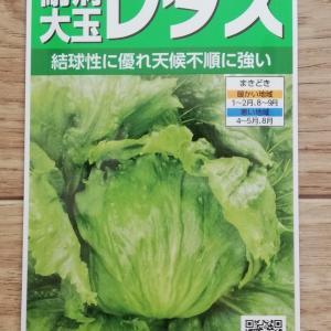 レタスの栽培記録 種まきから初収穫まで