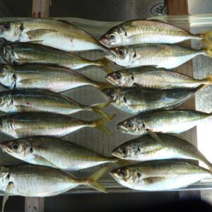 30回目アジ釣り、その後キス釣り