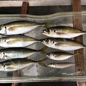 昨夜のアジ釣りは、まだ本調子では