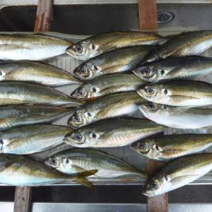 第7回アジ釣り、今回は釣れました。