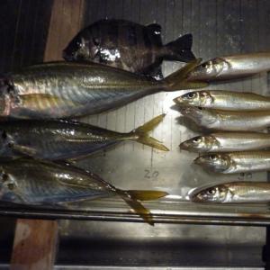 第28回アジ釣り・31回キス釣り、どちらも・・・