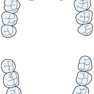 あなたの歯は何本ありますか?ご自身の歯を数えてみましょう!!