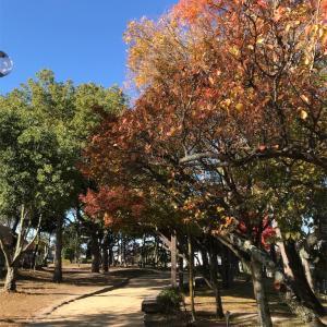 子供の森公園。岡山市お出かけスポット