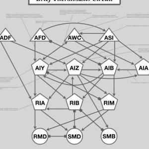 脳の地図、コネクトームで脳は理解できるのか?【Connectome/大脳解剖は無理?】