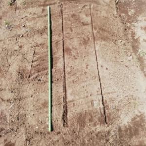 ホーレン草、小松菜播種・ひたちなか市旅(130)