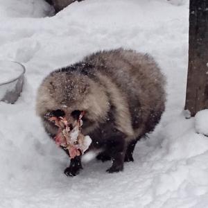 寒いなか耐え抜くモフモフ達(´ω`)旭山動物園