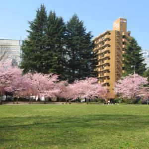 【仙台】それでも、春は来る。