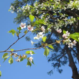 【仙台】そして、春は通り過ぎていく~上杉公園~