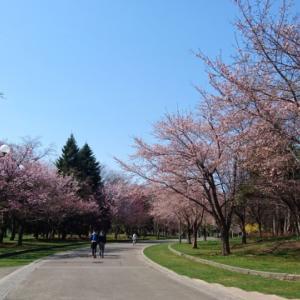 四季の楽しみ方を、教えてくれる。札幌『中島公園』に行ってみた。