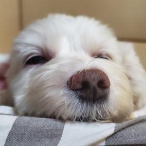 犬って風邪を引くの??