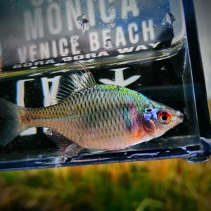 小さい子と釣りに行くときの注意点