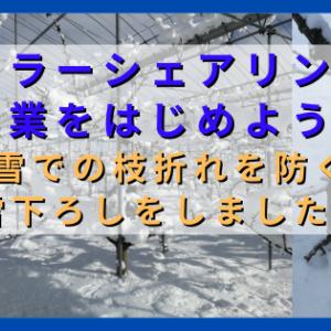 ソーラーシェアリングで農業をはじめよう 大雪による果樹の枝折れを防ぐため雪下ろしをしました。