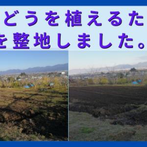 ぶどうを植えるために畑を整地しました。