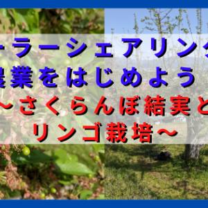 ソーラーシェアリングで農業を始めよう ~さくらんぼの結実状況とリンゴ栽培~