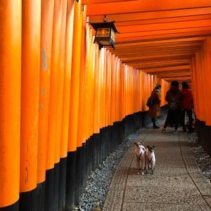 京都旅行~秋の紅葉①~過去旅行編