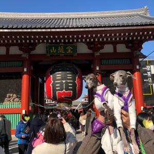 東京わんこ散歩、梅とホッピー~浅草(浅草寺、隅田川、ホッピー通り)~