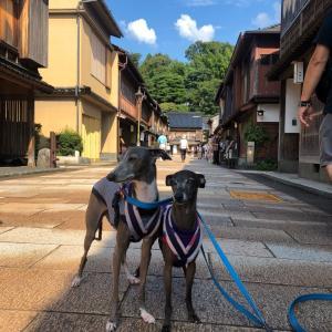 7月はビビのお誕生日旅行⑥~石川県(ひがし茶屋)~2019年