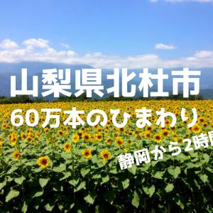 静岡からひまわり畑まで2時間!60万本の北斗市明野サンフラワーフェスを楽しむ日帰りコース