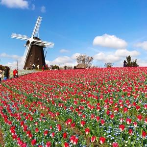 春爛漫🌸「鶴見緑地公園🌷」