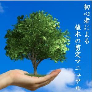 植木の剪定 まず何を切る? - 立ち枝(徒長枝)で外観を整える -