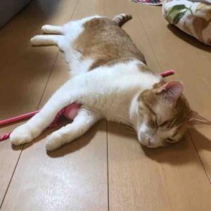 【疲れた時は】猫を見て、あとは寝るに限る