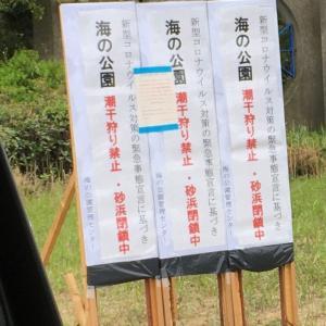 本日の横浜 7 潮干狩り