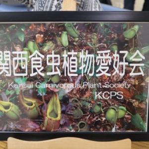 第103回関西食虫植物愛好会 関西集会