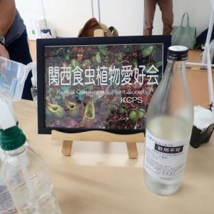 咲くやこの花館 食虫植物即売会開催!!