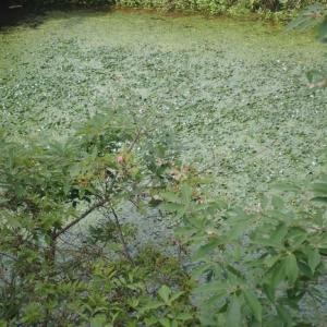 里山ガサガサと自然観察(とリクガメの餌採取)