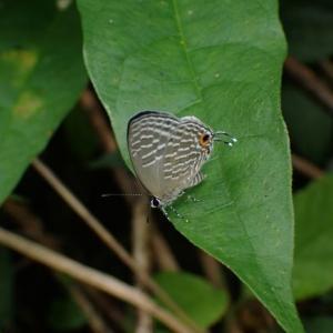 沖縄生き物遠征3年目 陸上動物(両生類爬虫類陸上昆虫等鳥類)編