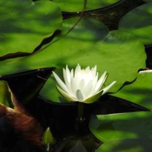 奈良県水辺ブラブラ散策 水草と野鳥と昆虫を少し