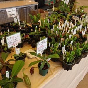 咲くやこの花館 虫を食べる植物展2020即売会!
